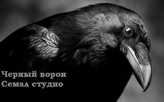 Черный ворон